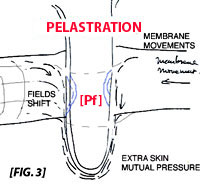 the mechanism of pelastration or membrane penetration, leading to dimensions.